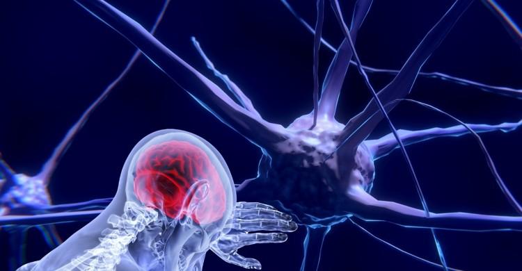 Noi neuroni pot să apară chiar şi la persoanele care se apropie de 90 de ani